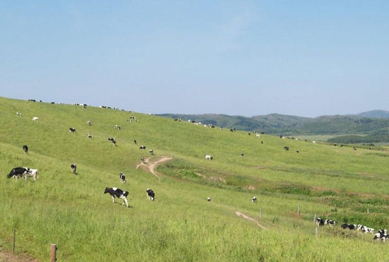 大規模草地の風景