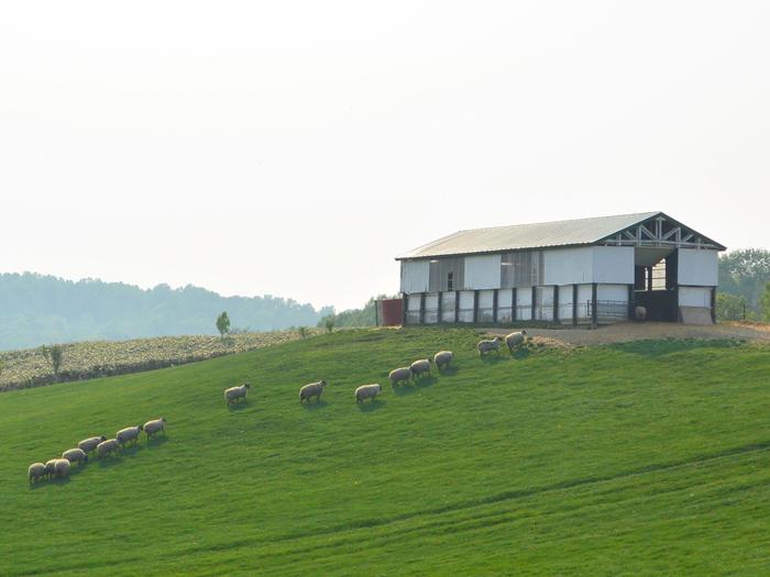 羊を巡る冒険 in 士別町