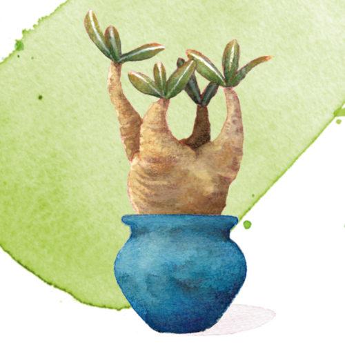 十方/陶芸家の植木鉢展2019 フライヤー